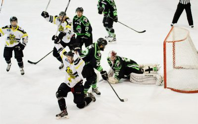 IBS help Bracknell Bees buzz their way to success